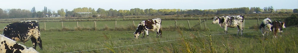 champs-vaches-frossay.jpg